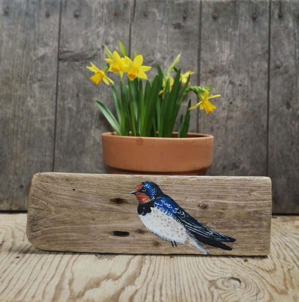 Augusta swallow