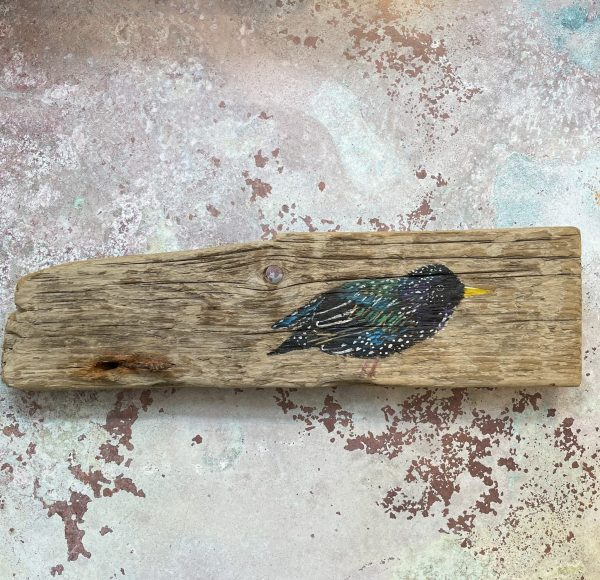 Ernest the starling