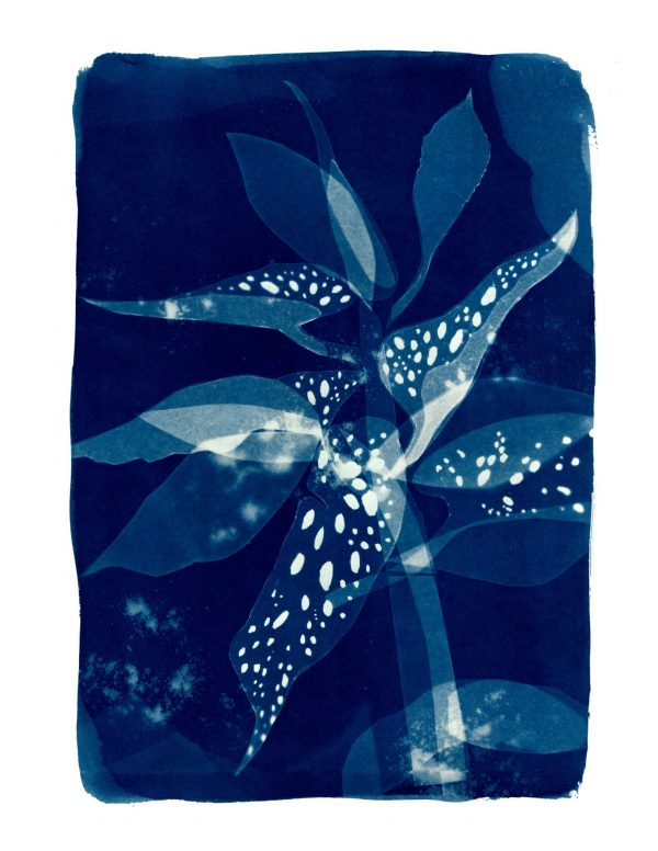 Claire_Cartwright_spotted_begonia_cyanotype_giclee_print_A3